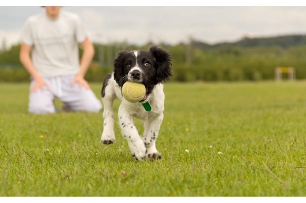 dog-training-153493037-ce439b8