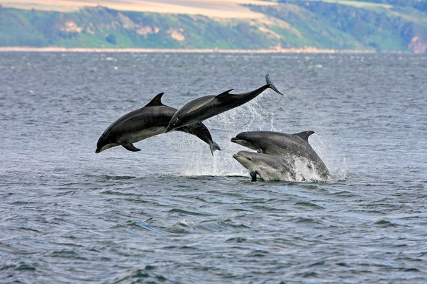dolphinsgetty-8b2492d