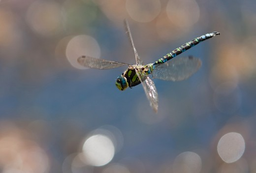 dragonflymain-68a4e10