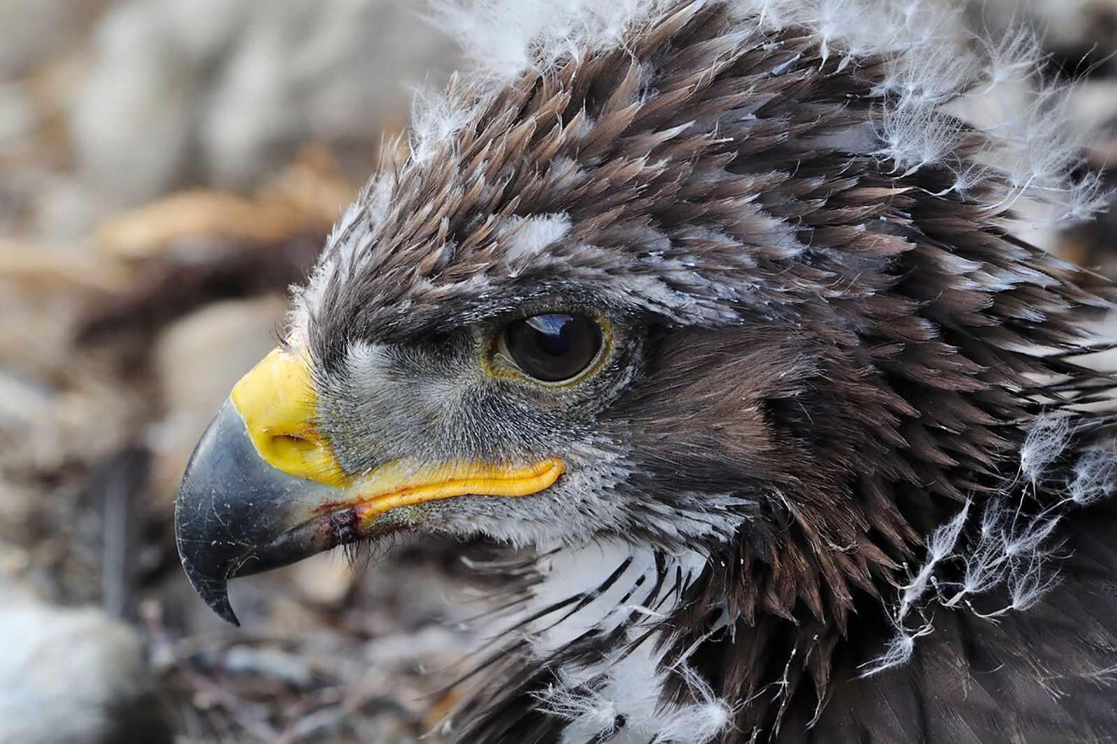 eagle-1-e08e556