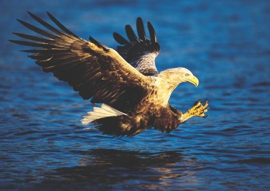 eagle_big-87c60d4