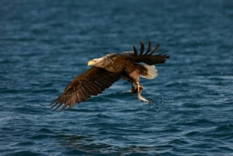 eagle_main-6845837