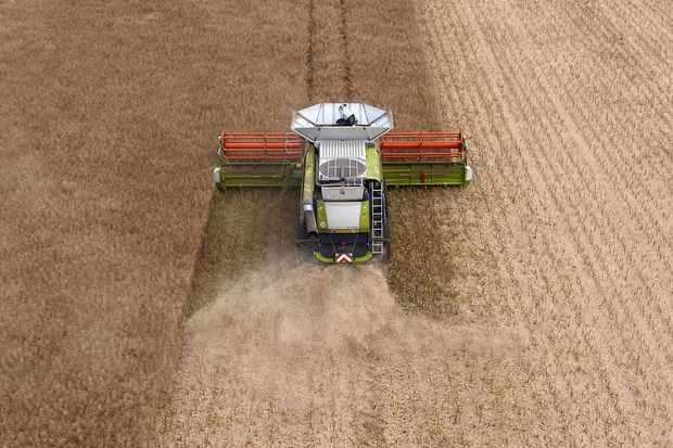 Farming rape field
