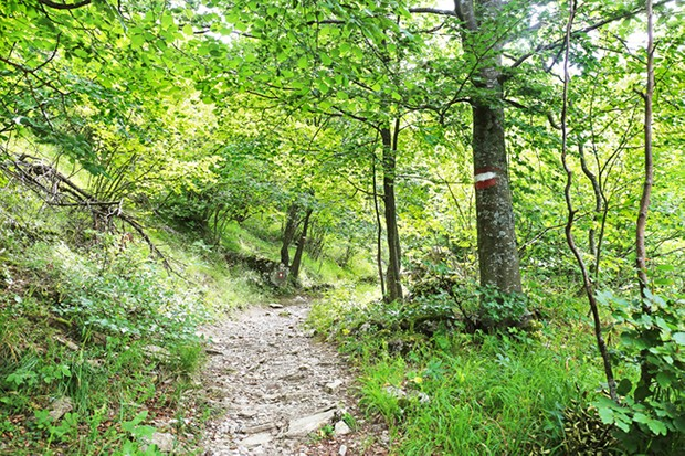 Path in the green forest. Hiking mark on tree