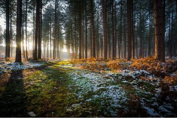 forest-UK-winter-768d8e8