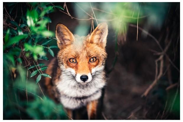 foxmain-607c9a1