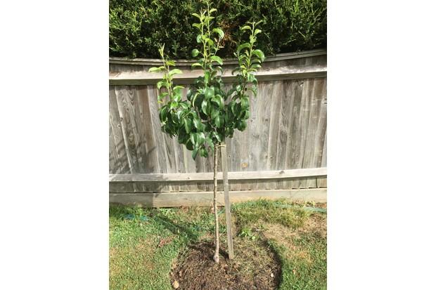 fruit-tree-092d30e