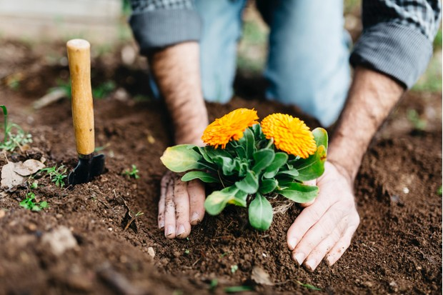 Spain, Tarragona. Man planting flowers in his garden.