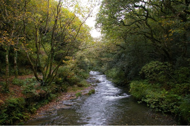 Peter's Wood and the Valency River