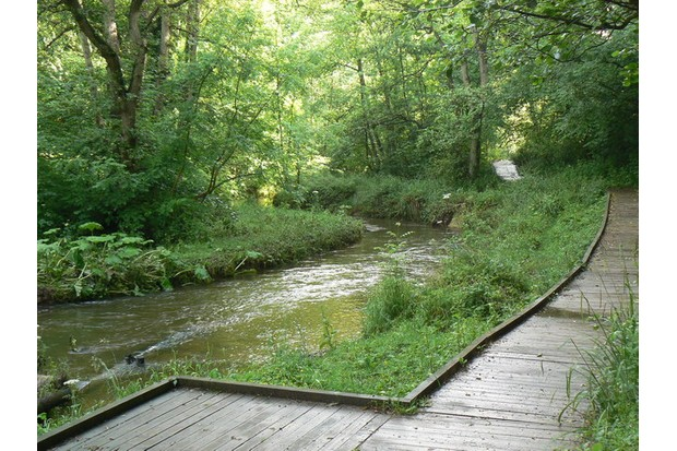 Board walk forming part of the footpath through Forge Valley Woods
