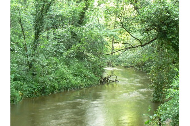 The River Derwent at the northern end of Scarwell Wood