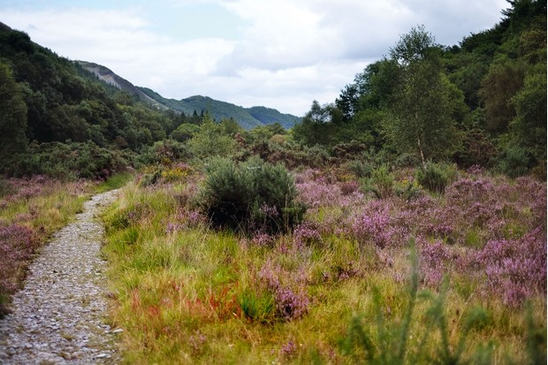 grogwynion-nature-reserve-4d866a3