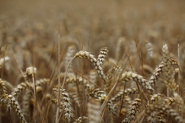harvestcrops-db350fe