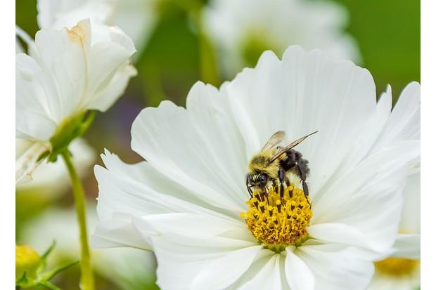 honeybee-bdfd0aa