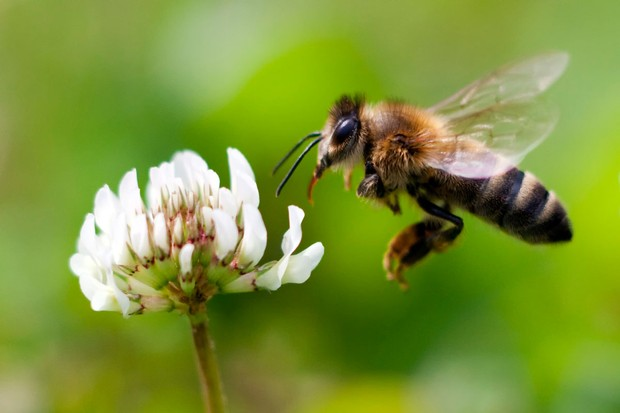 honeybeegetty-9e01ecd