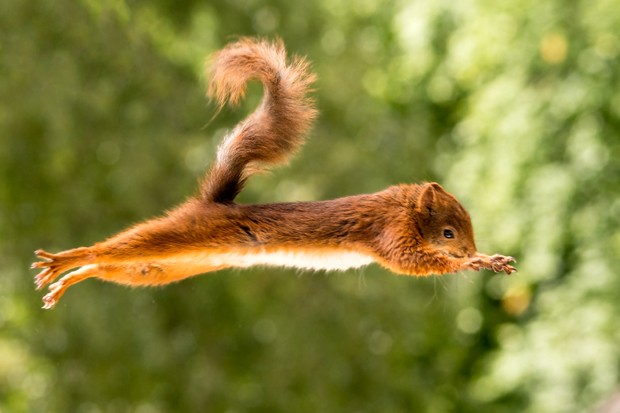 squirrel in the air