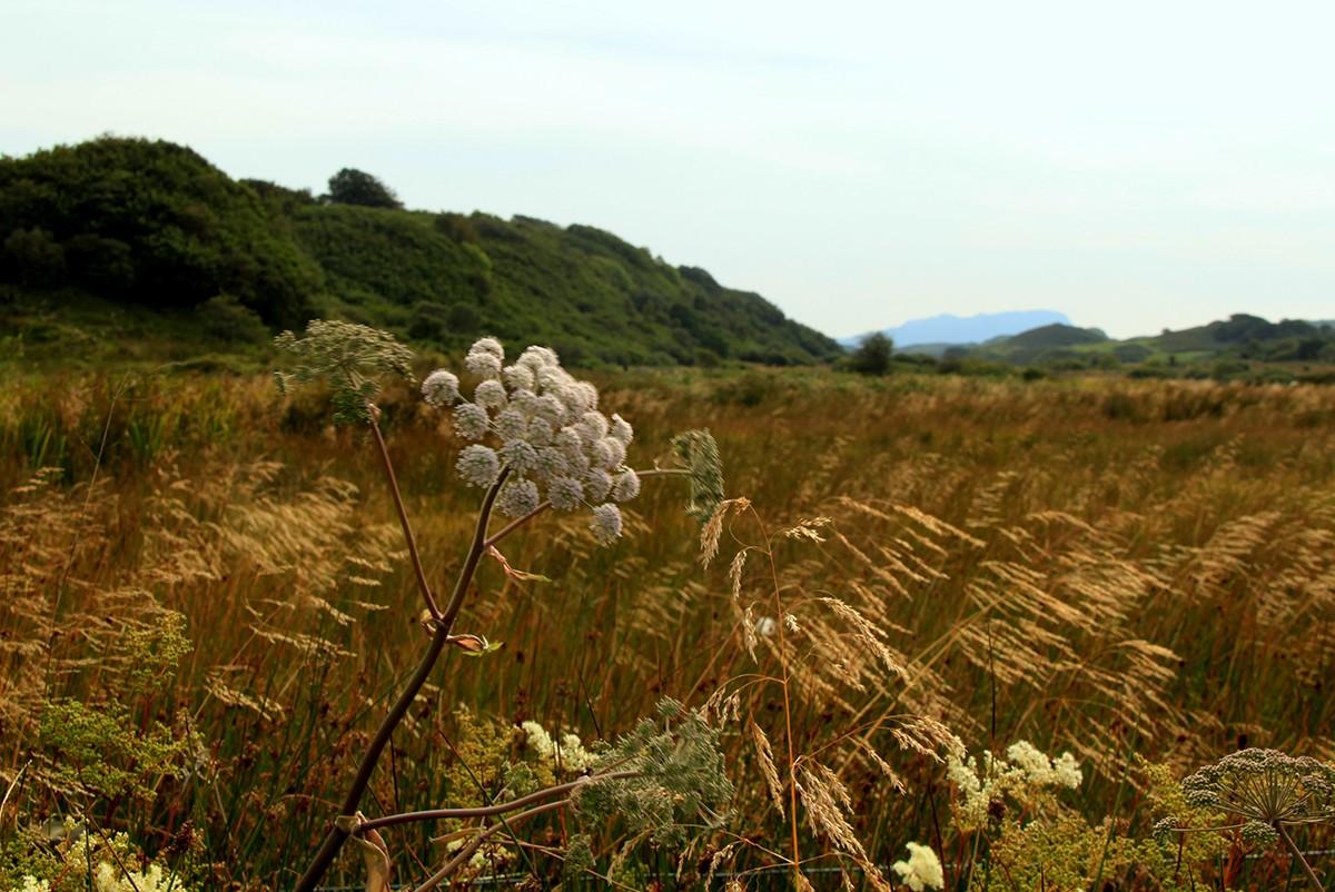 island-diary-meadow-a0b64e4