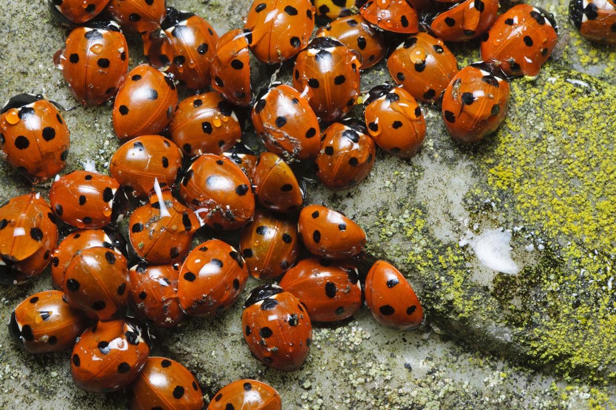 ladybirdsgetty-13556ea