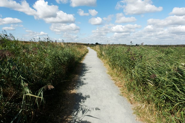 Rainham Marshes RSPB Reserve