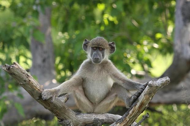 monkey-27f1d10