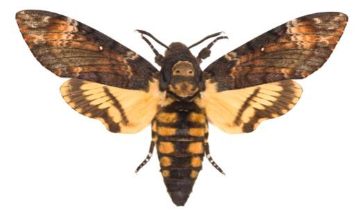 mothmain-a2c441e