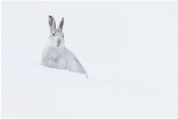 mountain_hare_hires_DAB2180-4127aab
