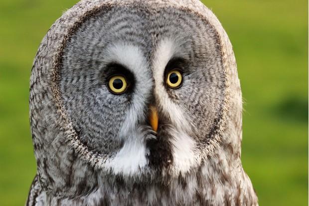 owl2_0-7b97709