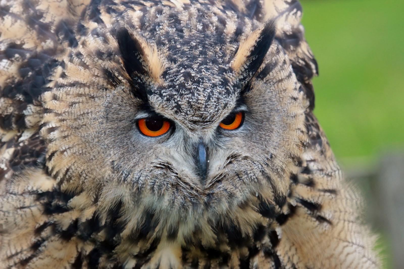 owl_0-20cfe3a