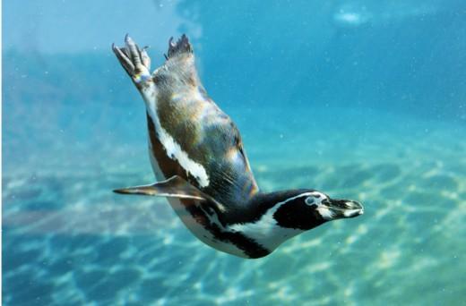 penguinmain-5d51a1b