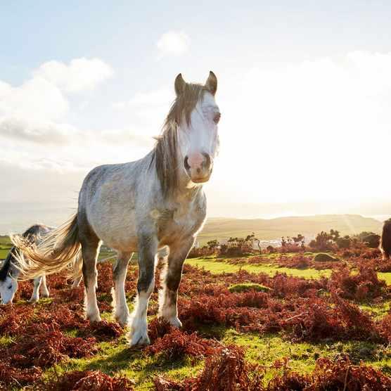 pony-cc1b117