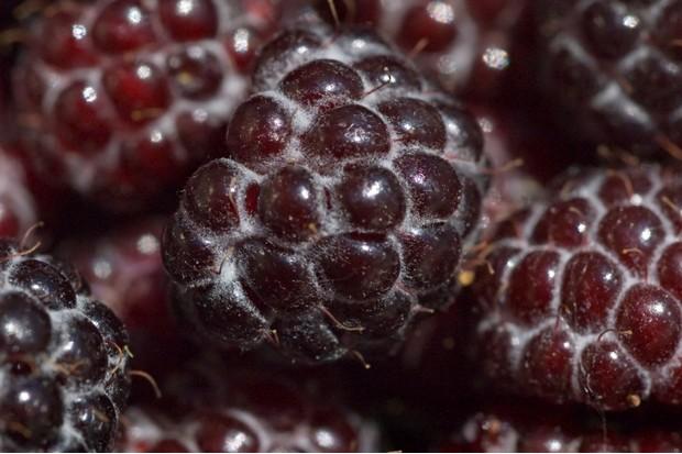 raspberry-998f895