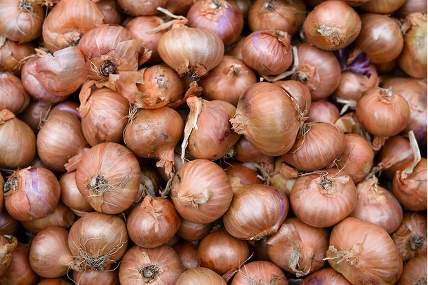 BERLIN, GERMANY - APRIL 05: Onions seen at the biannual gardeners' market at the Botanical Gardens on April 5, 2014 in Berlin, Germany. Approximately 100 nurseries and gardening retailers are offering gardening enthusiasts tips and supplies this weekend. Spring weather has arrived in Germany and garden lovers across the country are busy planting for the new season.  (Photo by Clemens Bilan/Getty Images)