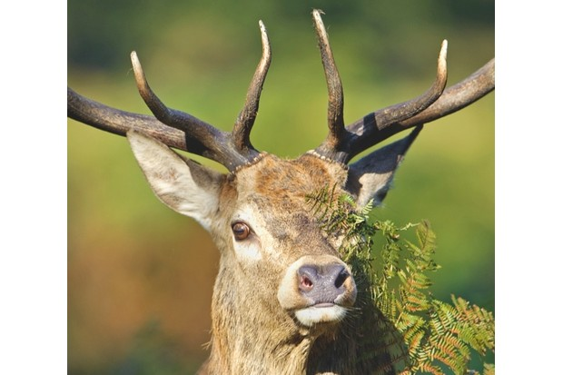 red_deer_hires_CAB0107-3b5a5c9