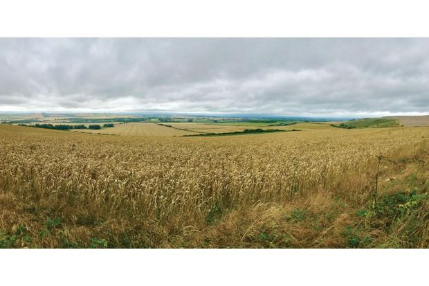 ridgeway-views-7383269