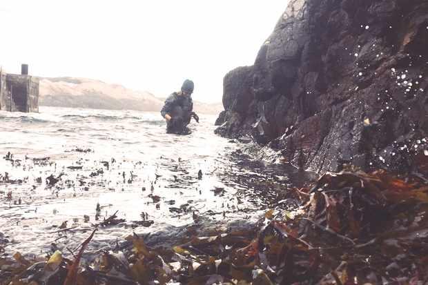seaweed-12.jpeg2_-8a1656e
