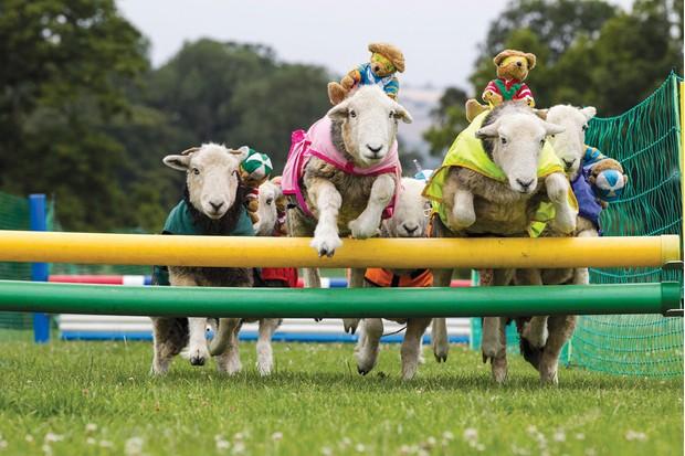 sheep-e71591b