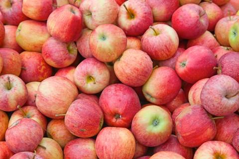 shutterstock_applesmain-3cea627