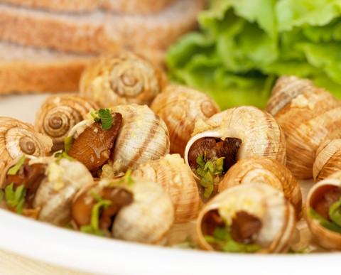 shutterstock_snailmain-3d34da6