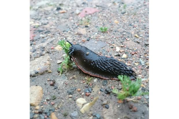 slug on ground