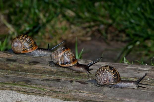 slugs-in-garden-958171e