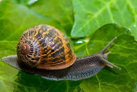 snail_main-ca8faf8