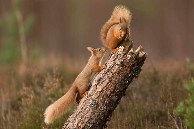 squirrel-3_0-9818581