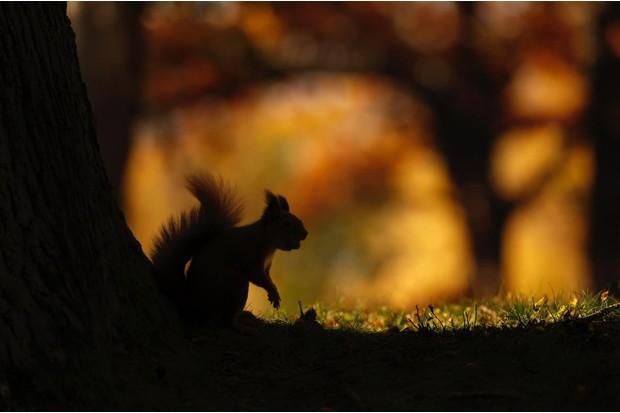 squirrel20silhouette20crop-4322a30
