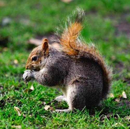 squirrelmain-e6e096d
