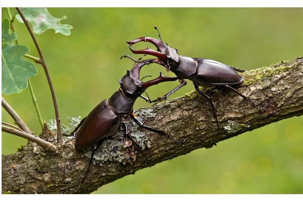 Jewel beetle | Animal Crossing Wiki | FANDOM powered by Wikia