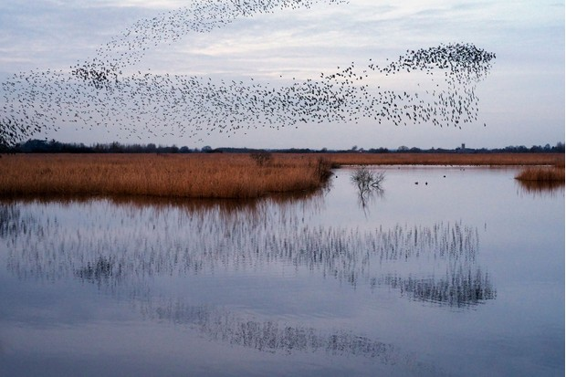 starling-murmuration-9262e28