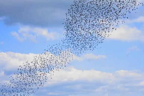 starlingsmain-b715982