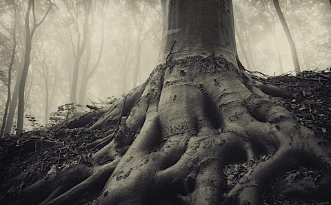 tree_web-597d128