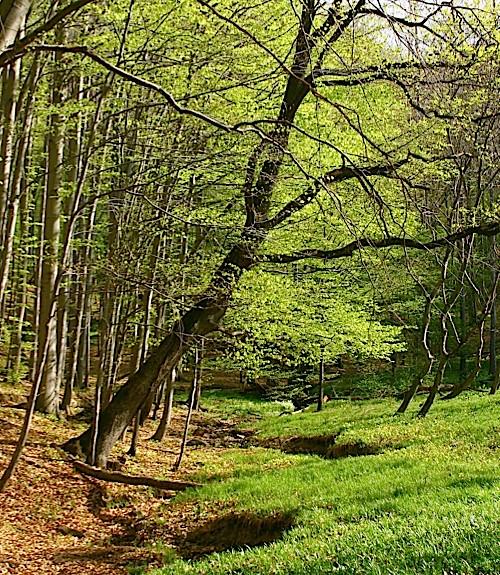trees-4648a07