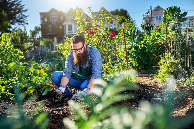 urban-gardening-8f2c895